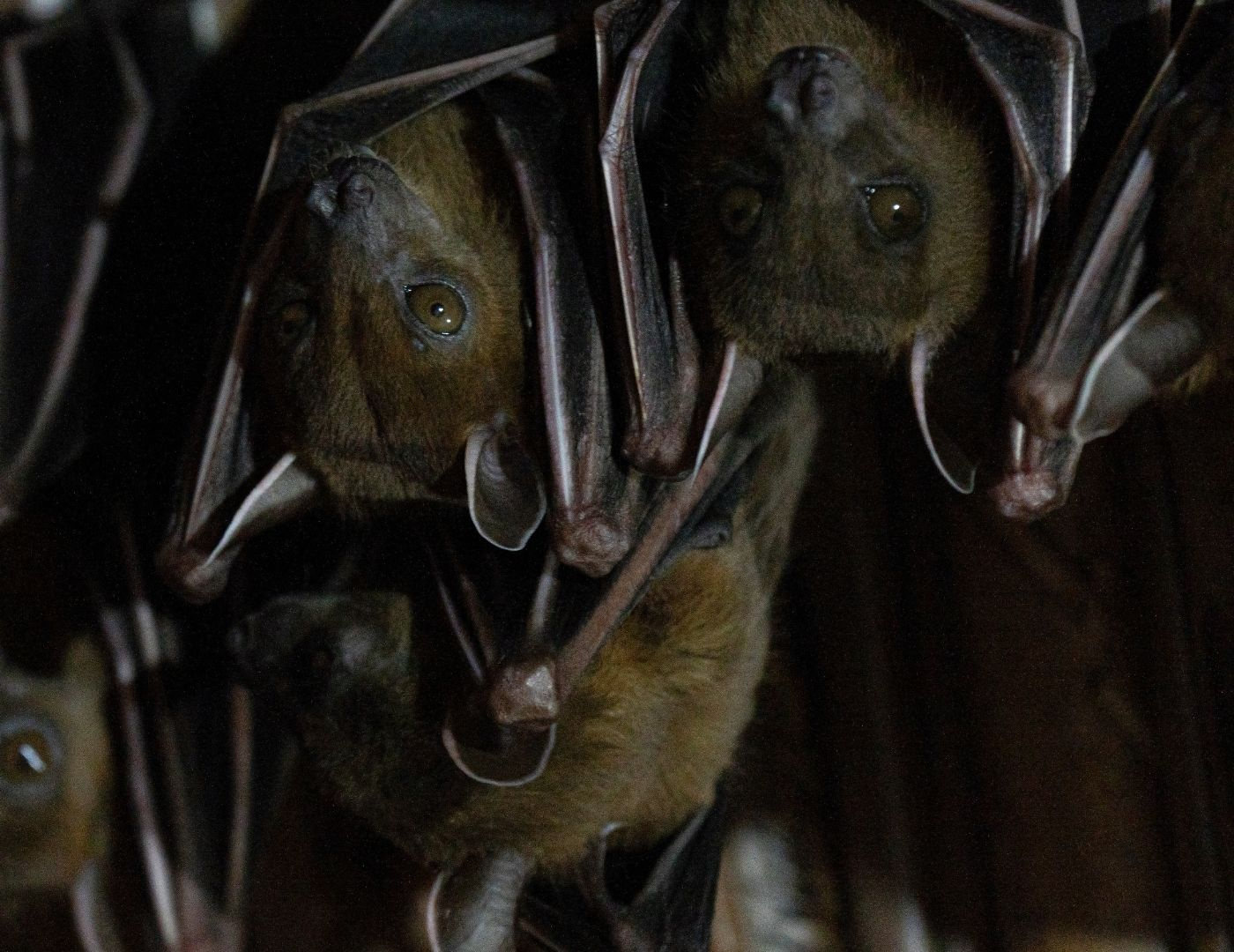 Manejo de Morcegos - São Paulo   Dedetizadora em SP